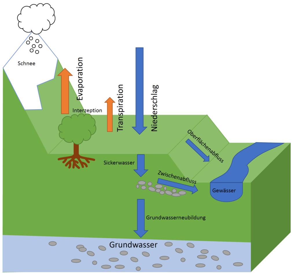 Schematische darstellung des Wasserhaushalts